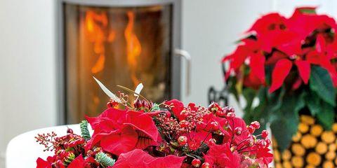 Petal, Flower, Bouquet, Flowerpot, Red, Cut flowers, Floristry, Interior design, Flower Arranging, Flowering plant,