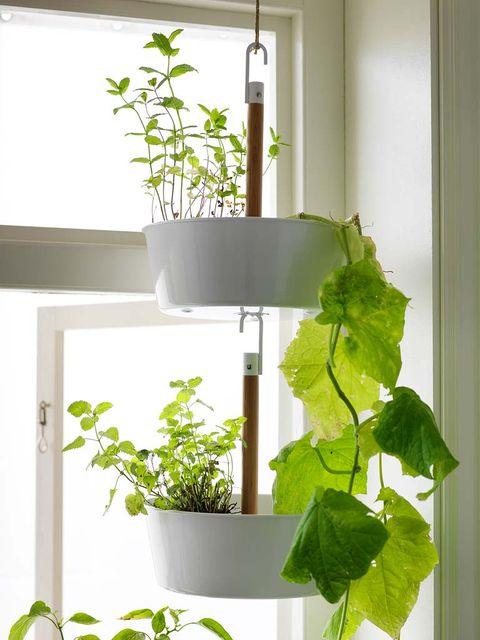 Plant, Leaf, Wall, Fixture, Plant stem, Interior design, Houseplant, Annual plant, Herb, Flowerpot,