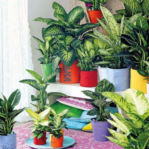Flowerpot, Plant, Interior design, Houseplant, Botany, Terrestrial plant, Flowering plant, Annual plant, Herb, Perennial plant,