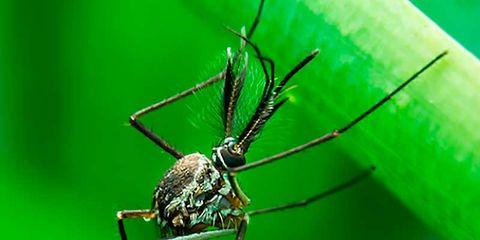 Invertebrate, Green, Insect, Arthropod, Organism, Pest, Macro photography, Teal, Parasite, Arachnid,