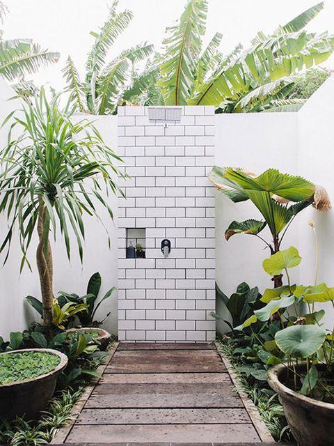 Plant, Tree, Botany, Houseplant, Room, Flower, Architecture, Flowerpot, Landscape, Garden,