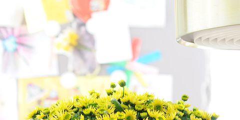 Yellow, Flower, Serveware, Petal, Interior design, Artifact, Flowerpot, Glass, Vase, Flower Arranging,