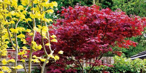 Yellow, Flower, Shrub, Garden, Botany, Petal, Home fencing, Yard, Picket fence, Annual plant,