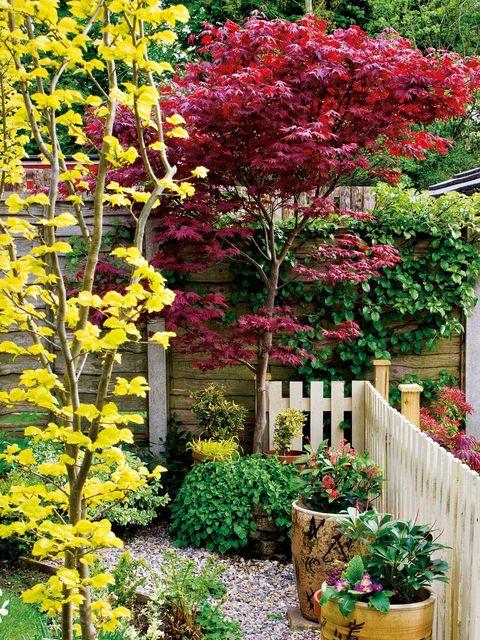 Flower, Plant, Tree, Flowering plant, Garden, Spring, Botany, Woody plant, Shrub, Landscaping,