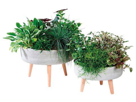 Flowerpot, Plant, Flower, Grass, Herb, Houseplant, Rosemary, Shrub, Flowering plant, Vascular plant,