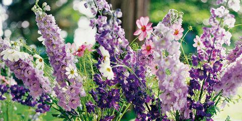 lilas en flor