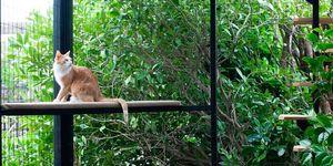Gatios: Casas para gatos