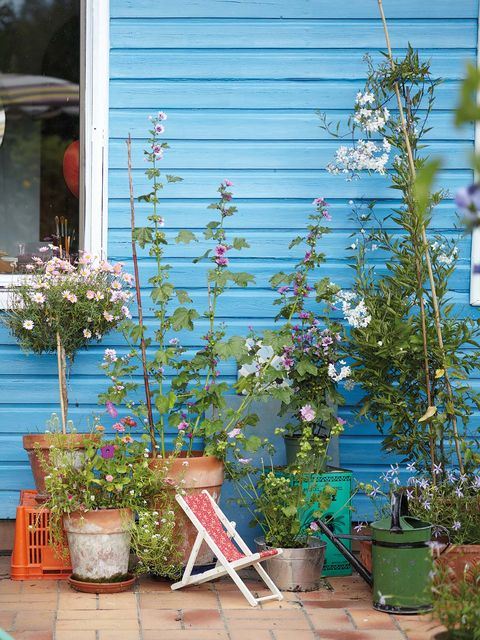 Blue, Flower, Plant, Turquoise, Yard, Garden, Flowerpot, Architecture, Home, Siding,