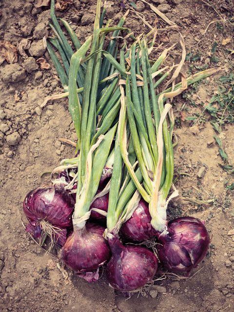 Produce, Root vegetable, Whole food, Vegetable, Ingredient, Food, Local food, Natural foods, Soil, Vegan nutrition,