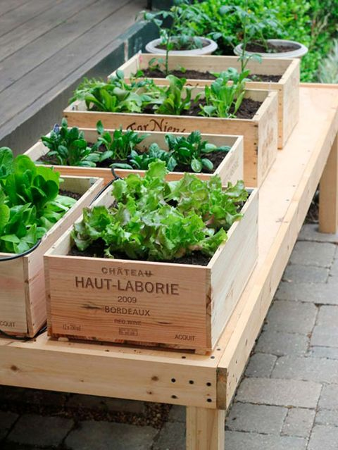 Herb, Plant, Garden, Flowerpot, Vegetable, Fines herbes, Leaf vegetable, Wood, Local food, Hardwood,