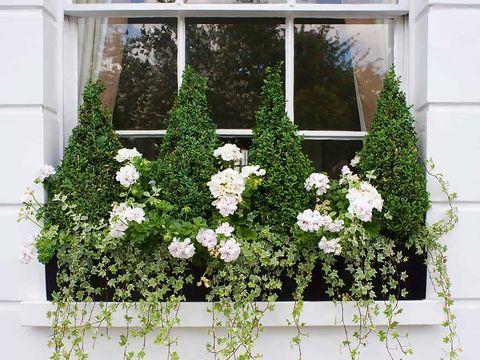 Flower, Shrub, Petal, Fixture, Botany, Flowering plant, Rectangle, Rose order, Garden, Rose family,