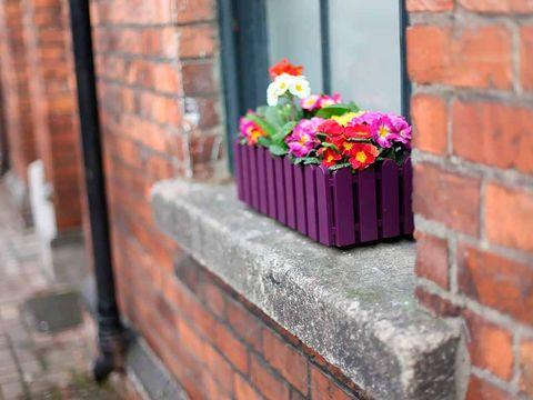 Brick, Petal, Flower, Brickwork, Wall, Purple, Cut flowers, Flower Arranging, Magenta, Floristry,