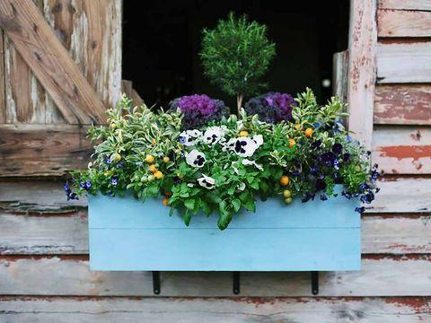 Wood, Flower, Wall, Shrub, Purple, Garden, Lavender, Siding, Annual plant, Floristry,