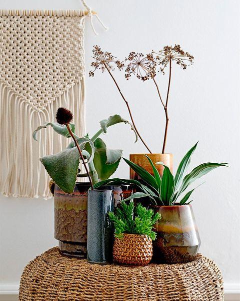 conjunto de plantas sobre un puf de fibra