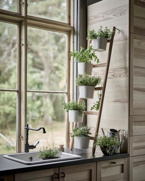 escalera con macetas y plantas en la cocina