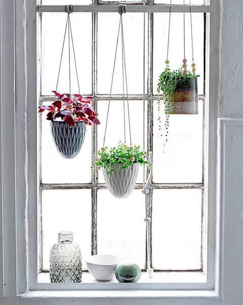 plantas colgantes en la ventana