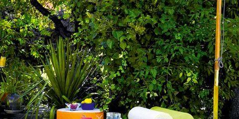 Outdoor furniture, Rectangle, Garden, Shrub, Linens, Home accessories, Flowerpot, Perennial plant, studio couch,