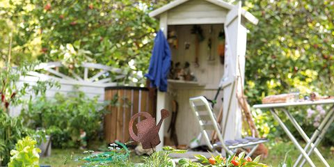 Plant, Garden, Shrub, Herb, Groundcover, Ingredient, Backyard, Annual plant, Yard, Fines herbes,
