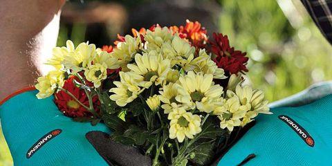 Petal, Flower, Bouquet, Flowerpot, Teal, Glove, Floristry, Flowering plant, Cut flowers, Flower Arranging,