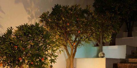 Stairs, Branch, Woody plant, Flowerpot, Trunk, Houseplant, Bonsai, Still life photography, Fruit,