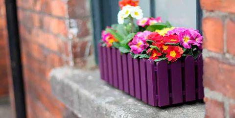 Brick, Petal, Flower, Wall, Brickwork, Purple, Magenta, Flower Arranging, Floristry, Violet,