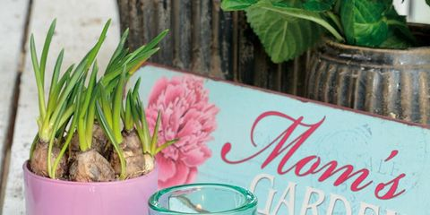 Glass, Flowerpot, Candle, Drinkware, Terrestrial plant, Flowering plant, Aqua, Interior design, Houseplant, Teal,