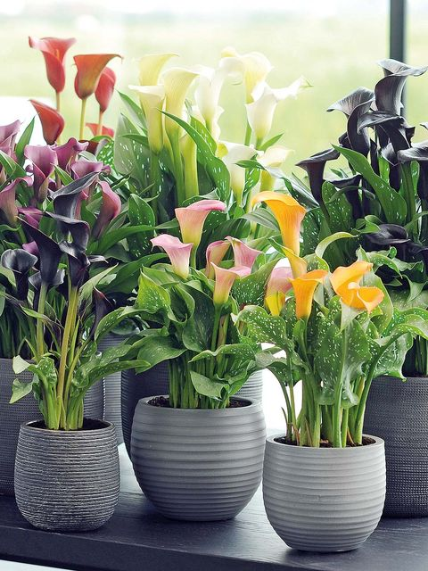 Flowerpot, Petal, Flower, Interior design, Artifact, Vase, Flowering plant, Floristry, Flower Arranging, Plant stem,