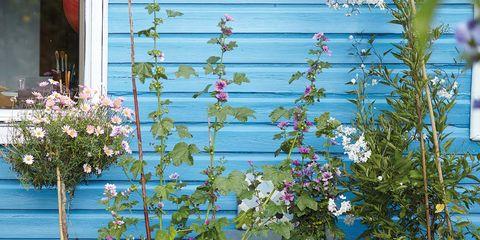 Blue, Flowerpot, Flower, Plant, Yard, Garden, Houseplant, Backyard,