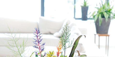 Plant, Flowerpot, Flower, Interior design, Artifact, Terrestrial plant, Vase, Flowering plant, Flower Arranging, Floristry,
