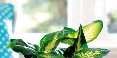 Leaf, Serveware, Drink, Linens, Teal, Ingredient, Dishware, Herb, Home accessories, Present,