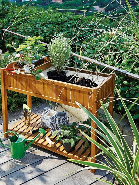 Garden, Botany, Grass family, Plant, Grass, Tree, Backyard, Wood, Deck, Yard,