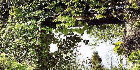 Plant, Furniture, Flower, Garden, Flowerpot, Petal, Outdoor furniture, Purple, Shrub, Couch,