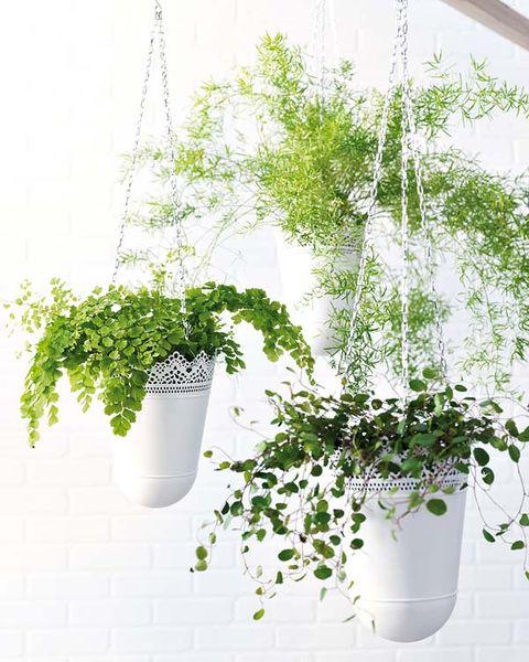 Flowerpot, Leaf, Interior design, Ingredient, Herb, Annual plant, Plant stem, Vase, Houseplant, Paint,