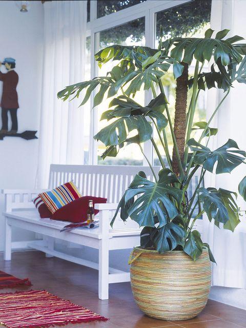 20 plantas de interior m s resistentes for Plantas de interior muy duraderas