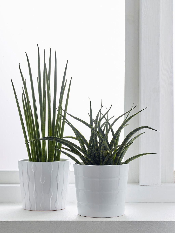 Plantas de interior con flor resistentes - Plantas resistentes de interior ...