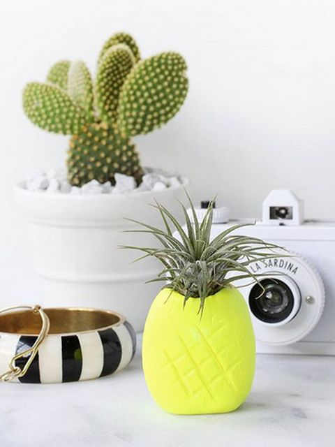 Flowerpot, Terrestrial plant, Houseplant, Flowering plant, Cactus, Interior design, Design, Still life photography, Vase, Home appliance,