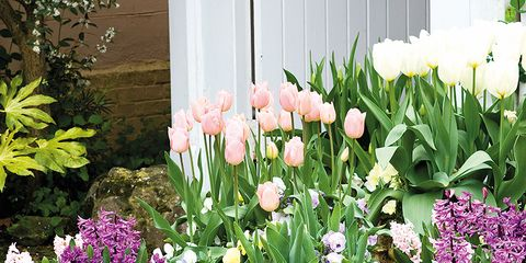 Flowerpot, Plant, Flower, Petal, Shrub, Purple, Garden, Flowering plant, Lavender, Interior design,