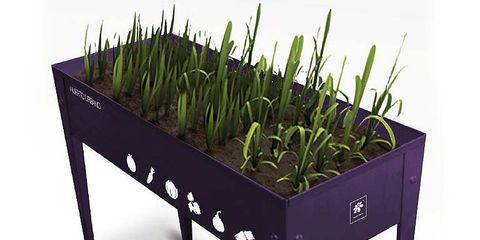 Product, Green, Grass family, Wheatgrass, Herb, Plant stem, Perennial plant, Produce, Vascular plant,