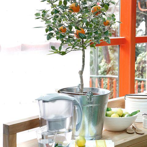 Serveware, Dishware, Mandarin orange, Citrus, Tangerine, Produce, Mixing bowl, Bowl, Orange, Fruit,