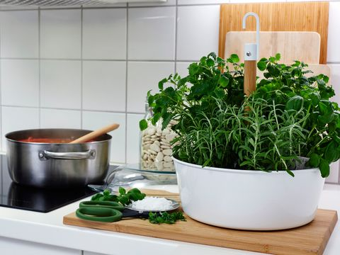 Ingredient, Cookware and bakeware, Mixing bowl, Herb, Kitchen, Bowl, Kitchen stove, Flowerpot, Fines herbes, Houseplant,