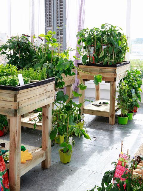 Plant, Flowerpot, Houseplant, Interior design, Herb, Annual plant, Herbaceous plant,