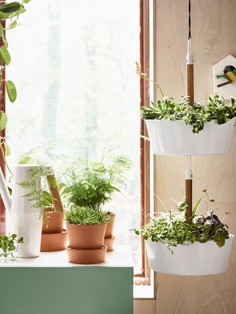 Flowerpot, Plant, Interior design, Houseplant, Annual plant, Plant stem, Herb, Vase, Pottery,