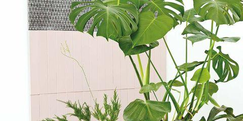 Flowerpot, Leaf, Botany, Interior design, Houseplant, Serveware, Vase, Plant stem, Annual plant, Pottery,