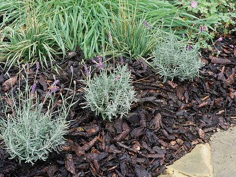 Plant community, Terrestrial plant, Subshrub, Groundcover, Shrub, Annual plant, Herbaceous plant, Perennial plant, Shrubland, Forb,