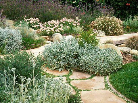 Grass, Plant, Shrub, Garden, Plant community, Groundcover, Botany, Subshrub, Grass family, Flowering plant,