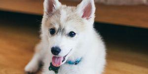 Perrito cachorro
