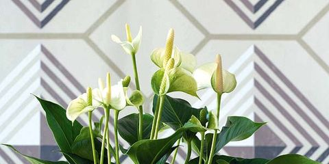 Flowerpot, Leaf, Flower, Petal, Flowering plant, Houseplant, Interior design, Artifact, Plant stem, Vase,