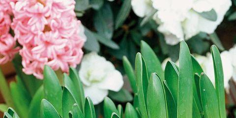 Petal, Root vegetable, Leaf, Vegetable, Flowering plant, Produce, Natural foods, Spring, Whole food, Annual plant,