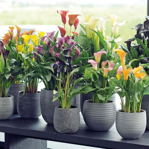 Flowerpot, Plant, Petal, Flower, Interior design, Flowering plant, Artifact, Vase, Floristry, Flower Arranging,