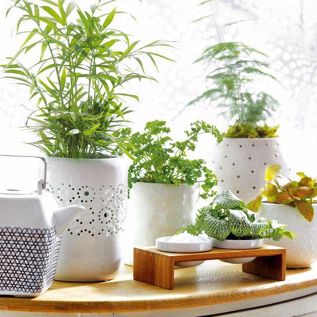 20 plantas de interior m s resistentes for Plantas de interior resistentes